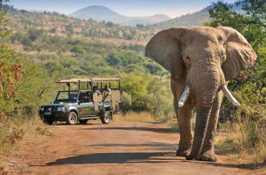 Südafrika Pilanesberg Nationalpark - malariafreie Big 5 Alternative zum Kruger Nationalpark